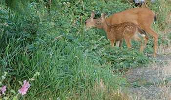 Bambimom1a